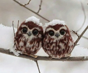 owl, cute, and snow image