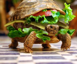 turtle, cute, and burger image