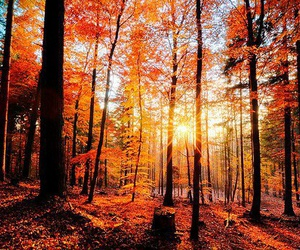 amazing, leaves, and trees image