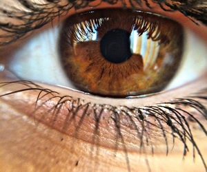 brown, brown eyes, and colour image