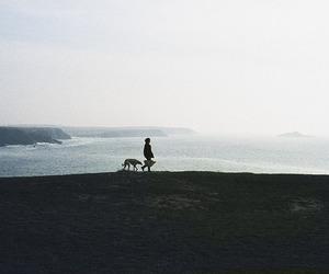 1981, nature, and quiberon image