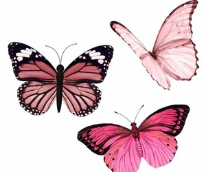 butterfly, overlay, and edit image