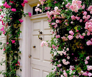 flowers, door, and pink image