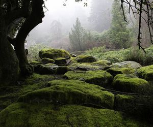 nature and misty; forest image