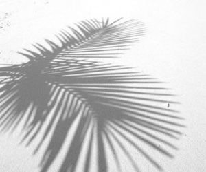 holiday, shadow, and palm tree image