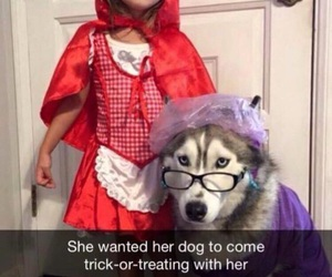 dog, cute, and costume image