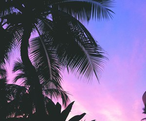 summer, palm trees, and tropical image
