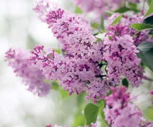 garden, peaceful, and lilac image