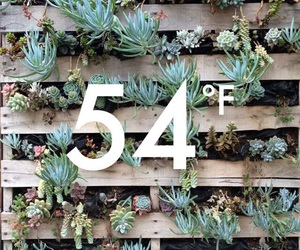 diy, succulents, and temperature image