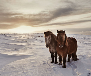 horses and snow image