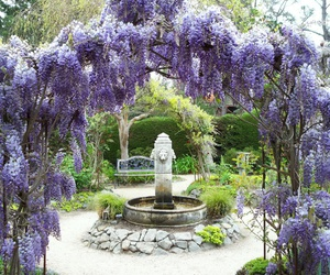 flower, fountain, and garden image