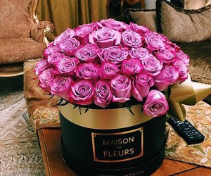 roses and pink image