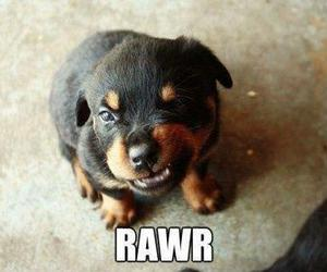 dog, cute, and rawr image