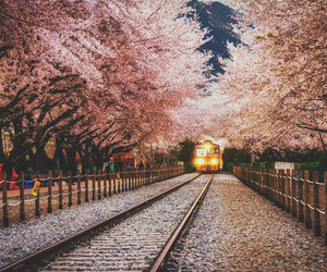 pink, train, and tree image