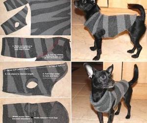 diy, dog, and pet image