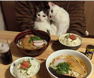 cats, date, and food image