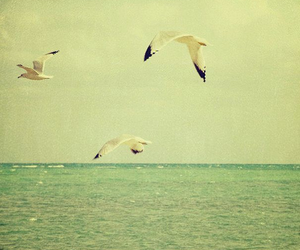 sea, bird, and photography image