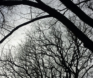 b&w, black+and+white, and trees image