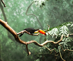 bird, toucan, and nature image