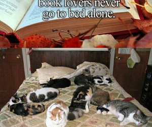 book, bed, and cats image