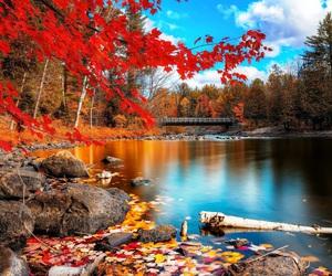 beautiful, autumn, and lake image
