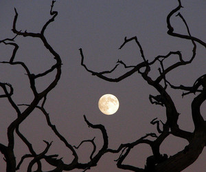 moon and tree image
