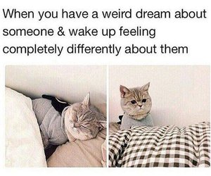 cat, funny, and Dream image
