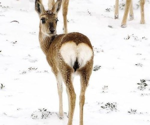 heart, deer, and snow image