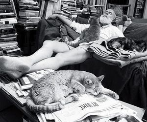 cat, cats, and ernest image