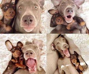 dog, selfie, and funny image