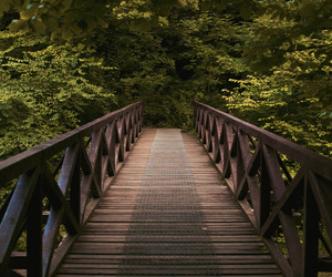 bridge, forest, and hipster image