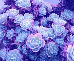 flowers, purple, and blue image