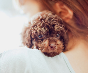 50mm, puppy, and f 1.4 image