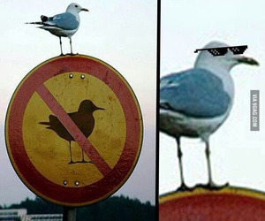 funny, bird, and lol image
