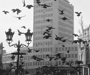 birds and city image