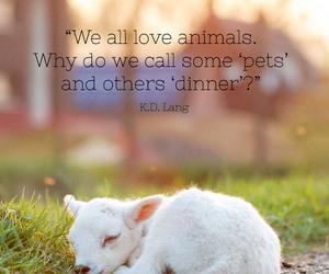 vegan, animals, and pet image
