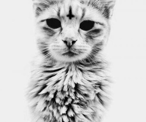 cat, black and white, and cross image