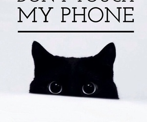 cat, wallpaper, and phone image