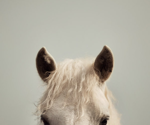 horse, photography, and white image