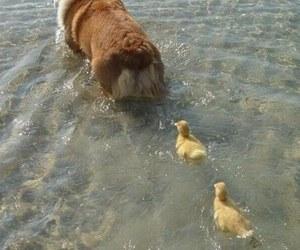 dog, duck, and animal image