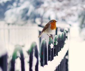 bird, fence, and red image