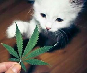 cat, weed, and marijuana image