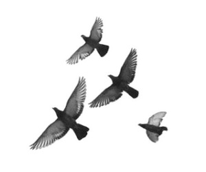 bird, overlay, and transparent image