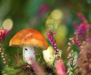 mushroom, flowers, and nature image