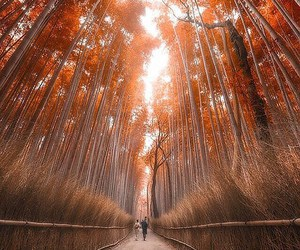 forest, autumn, and bamboo image
