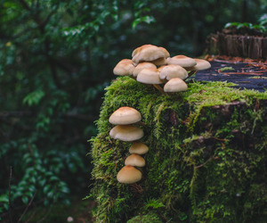 forest, fungi, and moss image