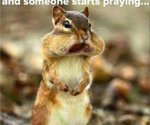 funny, eating, and squirrel image