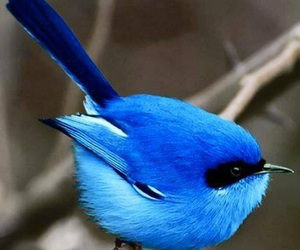 bird, blue, and pretty nature image