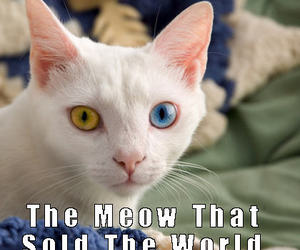 david bowie, cat meme, and man who sold the world image