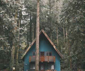 home, nature, and forest image